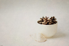 Winter white... (eleni m ( busy remodeling house and garden)) Tags: winterwhite bowl pinecones shell quote texture brendastar indoor dof offwhite brown simplism minimalism stilllife