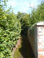 Passage between hedges, 2016 Aug 23