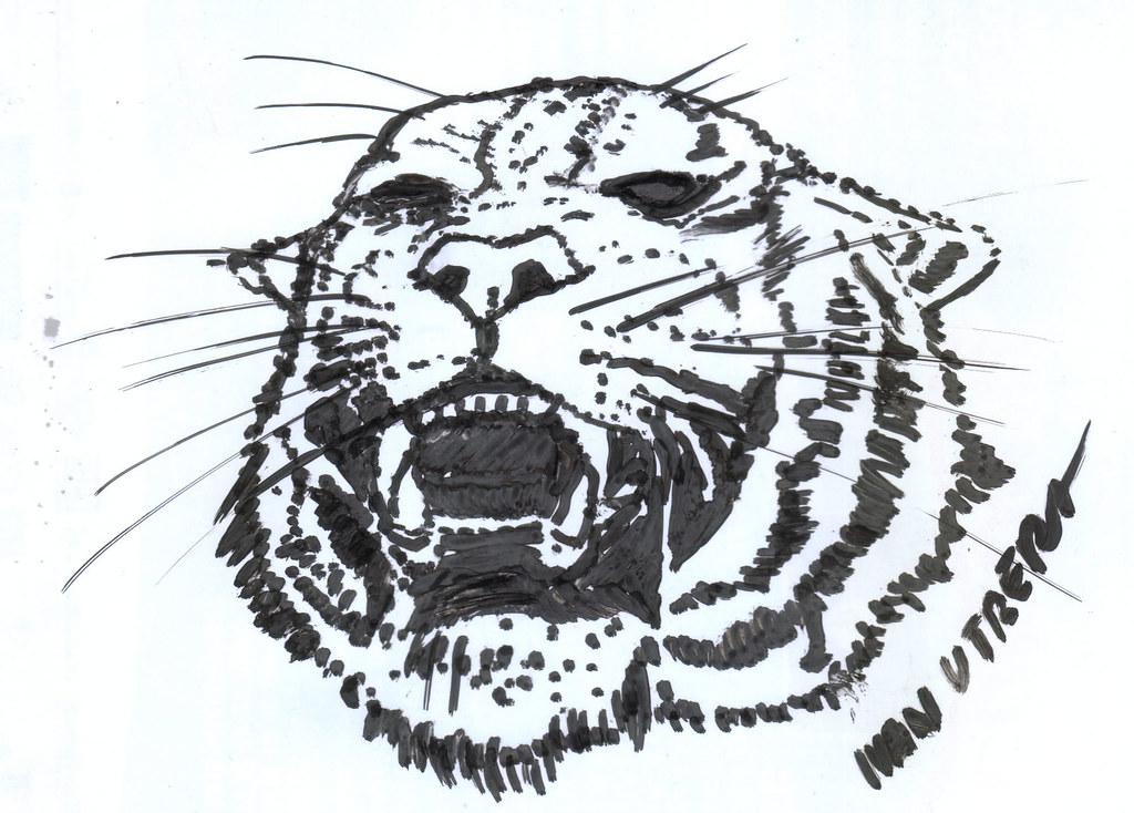 Tigre Sketch: The World's Best Photos Of Drawing And Tiger
