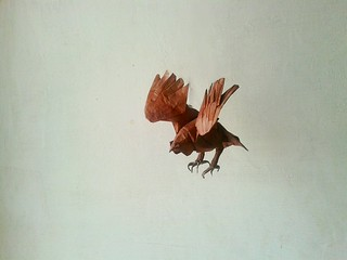 coopers hawk - seth friedman
