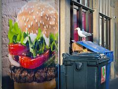 Burger King, Den Haag (ingehoogendoorn) Tags: seagulls bird birds trek seagull gull gulls streetphotography vogels denhaag burgerking thehague meeuw meeuwen vogel whopper zeemeeuw zeemeeuwen straatfotografie haagsemeeuw