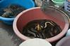 eel / market / July / 2015 / Khon Kaen, Thailand (gudiodotdotdot) Tags: thailand nikon market eel khonkaen thaifood d5000 thaiisan ตลาดแลงคำไฮ