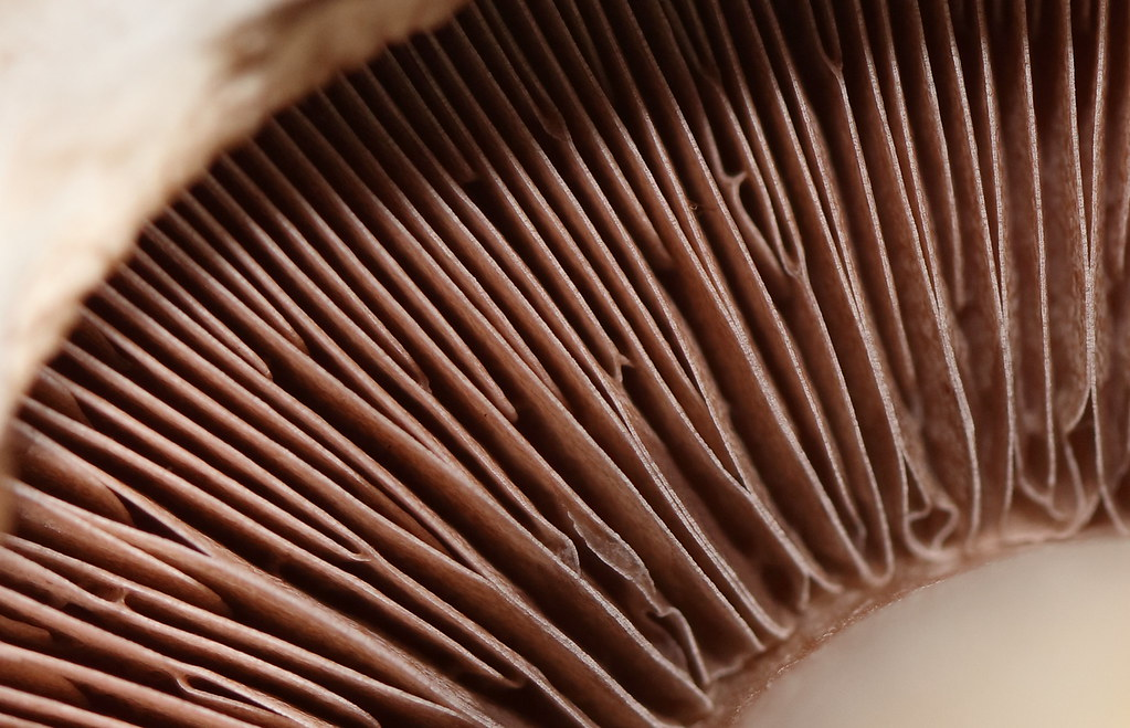 The Worlds Most Recently Posted Photos Of Lamellae Flickr Hive Mind