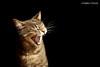 TRASTO (núriafosas) Tags: cat kitty kitten cute adorable meaw animal sleepy grey nap pet sleeping 50mm gato mascota siesta