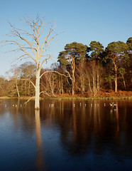 2016_12_0598 (petermit2) Tags: clumberpark clumber sherwoodforest sherwood nottinghamshire nationaltrust nt