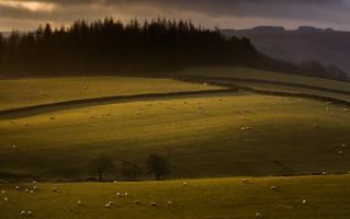Sheep and Molehills