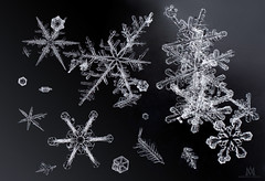fresh snow (marianna_m.) Tags: snow snowfall snowflakes ice crystals macro panasonic lumix gh4 symmetry winter canada mariannaarmata p3180010 monochrome