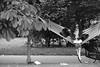 Dots and stripes (PIXXELGAMES - Robert Krenker) Tags: newspaper news cafe kaffee vienna wien snapshot unknown candid portrait portret schwarzweiss blackandwhite blacknwhite bnw fujifilm fujinon filmsimulation lifestyle street streetstyle urban streetphotographer streetphotography biancoenero lines stripes dots punkte linien hängematte laterne park hammok weis schwarz black white leaves