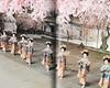 Maiko no Shiki 011 (cdowney086) Tags: gionkobu 祇園甲部 maiko 舞妓 geiko geisha 芸者 芸妓 miyakoodori 都をどり