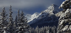 Canadian Rockies (Jeff Goddard 32) Tags: alberta canada banffnationalpark lakelouise conifers snow december canadianrockies rockymountains winter
