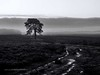 Wet Winter Morning, New Forest National Park (Stephen Munn) Tags: newforest monochrome nationalpark blackandwhite bw clouds tress tree water heathland heath heather tracks sky light