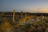 Dying Fence at Dawn (Shastajak) Tags: fencefriday fence posts wire barbedwire frost grass stanley lurcher stanleystillhashislightedcollarswitchedonasithasonlyjustgotlight beforesunrise