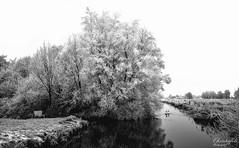 Ruige rijp (Fred Christoffels) Tags: rijp winter 2017 sneeuw natuur sigma canon zwanen outdoor snow nature frost vorst bomen trees