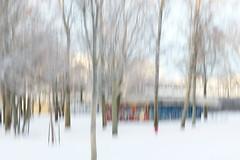 Beautiful January Day (evisdotter) Tags: beautifulday sunny winter snow park trees sooc icm intentionalcameramovement frost