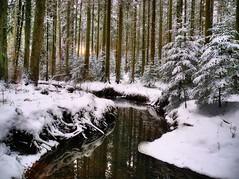 Naturschutzgebiet Eisenbach (almresi1) Tags: snow schnee welzheim bach river naturschutzgebiet wood wald