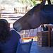 DSC07157 - NAMIBIA 2013   Auf Tuchfühlung