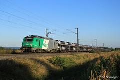 La BB 37051 et ses autos dans les champs de maïs (Lion de Belfort) Tags: bartenheim alsace prima fret sncf 37051 bb 37000 gefco