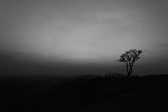 Melancholy (Premnath Thirumalaisamy) Tags: lonelytree meloncholy monochrome tree solitude lonely loneliness hampi