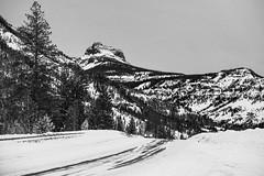 Cody Peak (wyojones) Tags: wyoming cody pahaskatepee yellowstonehighway eastentranceroad absarokamountains shoshonenationalforest snow logepolepines winter highway road car bw blackandwhite grayscale wyojones np