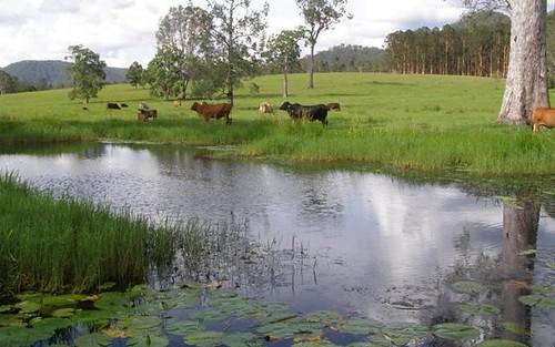 Part 2298 Coaldale Road, Coaldale NSW 2460