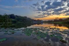 PPAS Lake Sunset | Scene 1 (Shamsul Hidayat Omar) Tags: sunset lake reflection tourism landscape photography high interesting nikon scenery dynamic lotus places scene malaysia omar range hdr d3 selangor shah alam hidayat greatphotographers shamsul ppas photoengine oloneo