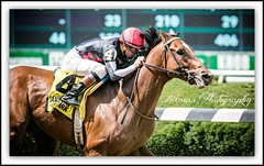 Texas Red (EASY GOER) Tags: park horses horse ny newyork sports race canon track belmont running racing 5d athletes races thoroughbred equine markiii