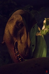 Rex (Mark Kaletka) Tags: wisconsin display exhibit paleontology milwaukee dinosaurs trex diorama tyrannosaur mpm milwaukeepublicmuseum