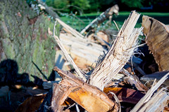 Baum nach Blitzeinschlag (Housetier84) Tags: wood germany deutschland three alpha blitz holz 77 gewitter baum braunschweig a77 sonyalpha blitzeinschlag hsgewitter sonyalpha77