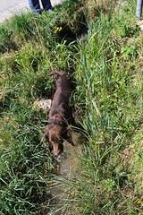 Cosette_196 (leeder-five) Tags: cosette rin pflegehund
