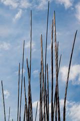 Sprouting Blades (John-FX) Tags: seattle blue sky sculpture grass clouds sunny center emp blades museam