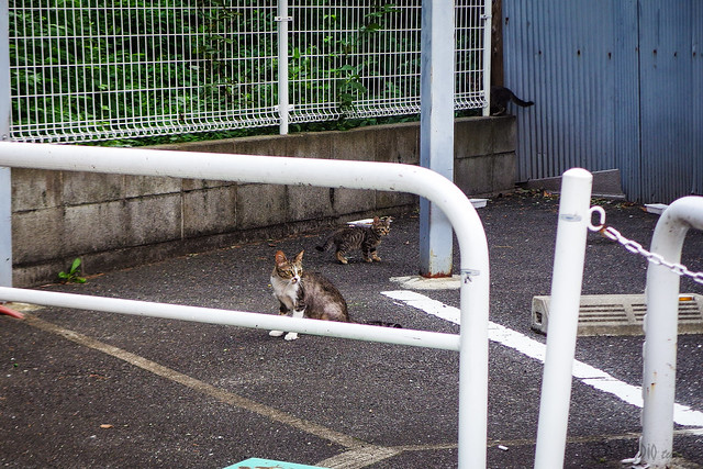 Today's Cat@2015-08-11