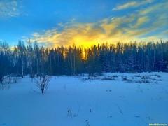 Удивительны краски зимнего декабрьского неба.