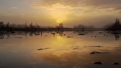 Sunrise (Jazzmatica) Tags: nieuwkoop zuidholland nederland wet water nature painting best winner sun birds