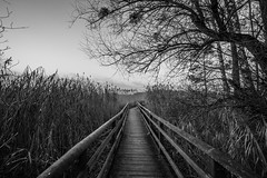 Steps in the dark lake (Orlando S. Olivieri) Tags: black white monochrome landscape pond canon eos 6d trees wooden path dark sky mysteries wide angle 14mm samyang