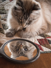 Seeing Double (SallySuomi) Tags: blue mirror cat kitty happenstance reflection