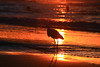 Egretta Garzetta at sunset - Tel-Aviv beach (Lior. L) Tags: egrettagarzettaatsunsettelavivbeach egrettagarzetta sunset telaviv beach bird animals fauna biodiversity biology beaches nature travel silhouette silhouettes israel travelinisrael reflection backlight contraluz sea seascapes