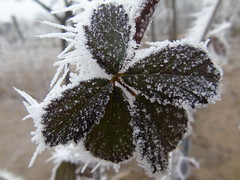 DSC00464 (tamasrafael) Tags: winter dér zúzmara