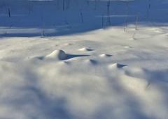 (Rock Water) Tags: snow hummocks shadows blueshadows