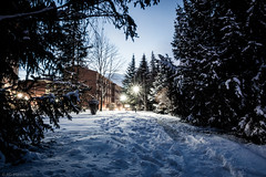 Getting the winter blues (Anthony P26) Tags: category eskisehir landscape nightscenes places snow turkey yunusemrecampus outdoor turkiye campus trees snowfall tracks footprints bluehour lamps lightstars pine branches branch canon canon1585mm canon70d cold freezing freeze frozen wow