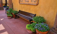 Bench and flowers (David Juckett) Tags: