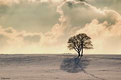 16012017-DSC_0279 (vidjanma) Tags: arbres traces neige nuage