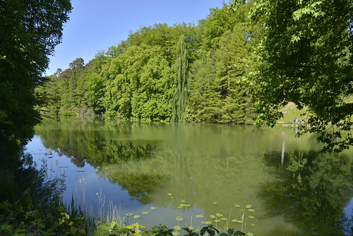 Végétation luxuriante autour de l'étang de la Grande-Queue