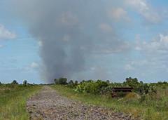 burn (the feral man) Tags: nature natural florida dryprairie kissimmeeprairie staeparks kissimmeeprairiepreservestatepark