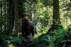 Hike to the Mountains I (evolvingLight) Tags: sky mountain nature rock forest landscape climb österreich scenery outdoor hiking natur hike berge kaiser fels approach landschaft wandern wilder kufstein kaisergebirge zustieg