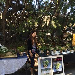 Satomi Kasahara of Seed Engai spoke on judging criteria (cieneguitan) Tags: lan bunga ran orkid okid angrek anggerek toyoran