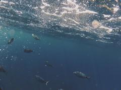 IMG_0155 (Claudio Giambusso) Tags: camera light fish color water relax intense underwater cam sub liguria pic moment camogli gopro vsco vscocam