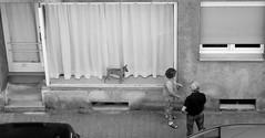 curious (ifranke) Tags: street people bw dog blackwhite fenster scene hund sw personen schwarzweis