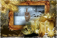 Happy New Year 2017! (Xena*best friend*) Tags: bradpitt bp happynewyear happy2017 cats whiskers feline katzen gatto gato chats furry fur pussycat feral tiger pets kittens kitty piedmontitaly piemonte canoneos760d italy wood woods wildanimals wild paws animals calico markings ©allrightsreserved purr digitalrebelt6s efs18135mm flickr outdoor animal pet winter snow cold frozen catsinthesnow catsrunninginthesnow catsplayinginthesnow catshavingfuninthesnow happynewyearcard card 2017