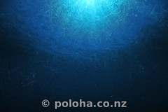 Plankton soup (Daniel Poloha) Tags: plankton bloom spring summer soup jelly surface ocean pacific underwater undersea temperate