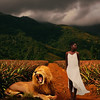 Just look the other way (Twylah McCullough) Tags: white dress lion mountain red look away composite surreal